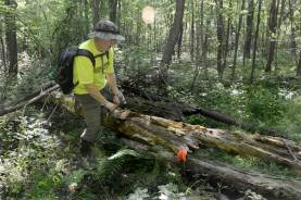 Butler NCTA's John Stehle checks a log that needs to be cut to make way for the trail through the wooded area along Pry Road. (Darrell Sapp/Post-Gazette)