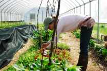 Andrea Heim, farm manager at Spice Acres, tends to some celosia transplants in the farm's hoop house in Cuyahoga Valley National Park in Ohio on June 3, 2016. Spice Acres is part of the National Park Service's Countryside Initiative to preserve farmland through sustainable practices.