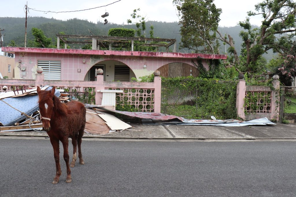A horse stands in front of debris on a street in Caguas. (Elizabeth Bloom/Post-Gazette)