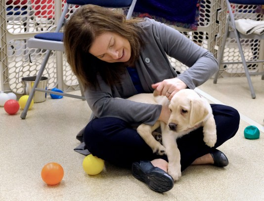Supplemental Staffing puppy sponsor Cristie McKenzie pets a Labrador Retriever puppy during a Special Auxiliary Play Date for invited guests at the Ability Center in Sylvania. THE BLADE/LORI KING