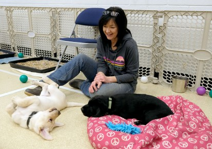 Laura Pelwecki watches Labrador Retriever puppies play during a Special Auxiliary Play Date for invited guests at the Ability Center in Sylvania. THE BLADE/LORI KING