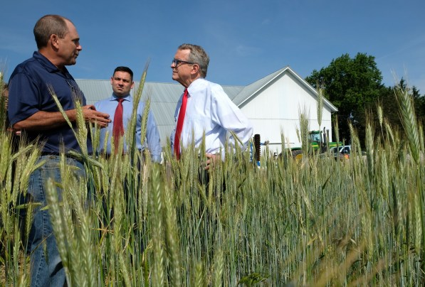 Kris Swartz, left, shows Ohio Governor Mike DeWine, right, his rye frield in Perrysburg, Ohio on Wednesday, June 19, 2019. Center is State Representative Haraz N. Ghanbari (R-Perrysburg). THE BLADE/LORI KING