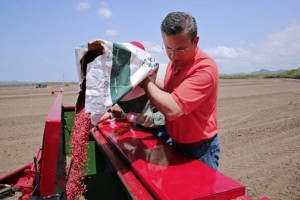 Gov. García-Padilla visits the future rice plantation in Guánica. (Credit: La Fortaleza)