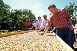 Gov. Alejandro García-Padilla inspect coffee beans during a visit to Utuado on Wednesday.