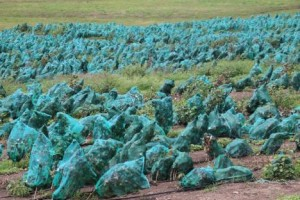 Bayer CropScience in Sábana Grande. (Credit: farmindustrynews.com)