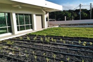 The firm's LEED projects include the Dr. Cayetano Coll y Toste elementary/middle school in Arecibo.