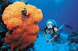 2-Tank-Scuba-Diving-Tour-from-Nassau-Bahamas