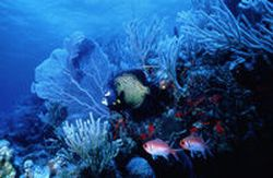 Scuba-Diving-Tours-in-Nevis–Saint-Kitts