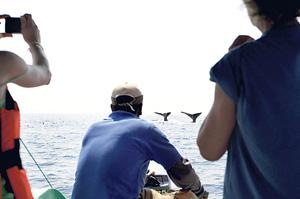 Whale-Watching-in-Sri-Lanka