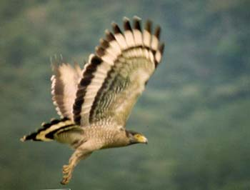 Boulder Garden Hotel Resort Kalawana Sri Lanka - Birdlife