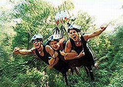 cairns-minjin-jungle-swing-in-cairns