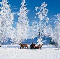christmas-horse-drawn-sleigh-ride-from-salzburg-in-salzburg-1