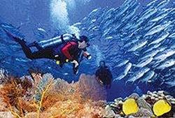 dedicated-dives-for-certified-divers-from-puerto-vallarta-in-mexico