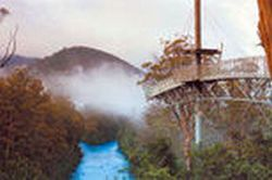 huon-valley-and-tahune-forest-airwalk-tour-from-hobart-in-hobart