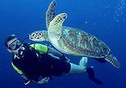 learn-to-dive-puerto-vallarta-beginners-scuba-course-in-puerto-vallarta-mexico