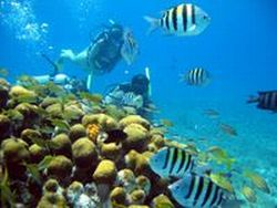 padi-discover-scuba-diving-course-in-cozumel-in-cozumel