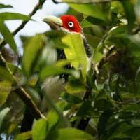 sinharaja_rf_birds