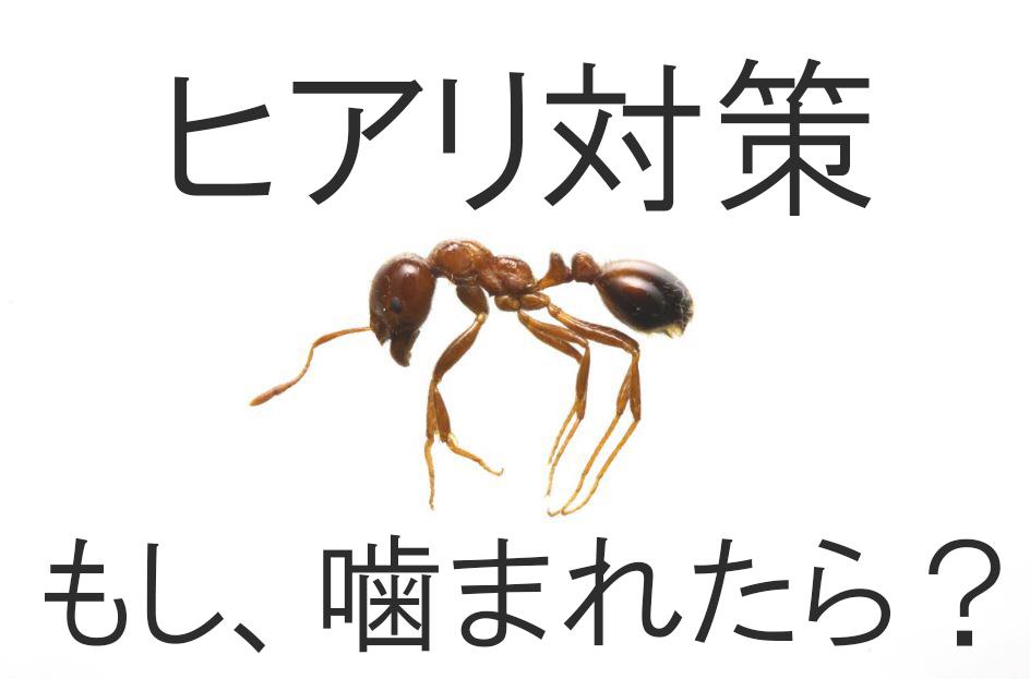 ヒアリの大きさと特徴や見分け方!刺された毒の症状と対処や駆除対策
