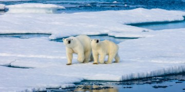 Russia to invest nearly $100 million to develop vessel for Arctic survey