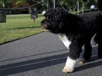 Bo, Obama family dog, dies: 'He was exactly what we needed'