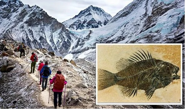 Bible discovery: 'Marine fossils' found atop Mount Everest 'could be proof of Great Flood'