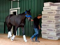 Baffert: Anti-Fungal Meds Given to Derby Winner Had Steroid