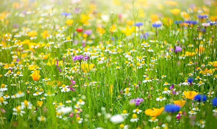 How to plant wildflower seeds - Three easy tips for a beautiful mini meadow