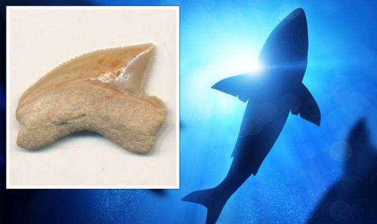 Archaeologists baffled by mysterious 80 million-year-old shark fossils found in Jerusalem