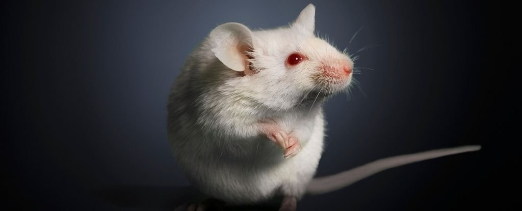A Never-Before-Seen System For Burning 'Deep Fat' Has Been Found in Mouse Studies