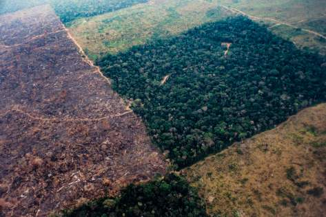 Clearing the Amazon rainforest for livestock farms in Brazil in 2017. (Brazil Photos/LightRocket/Getty Images