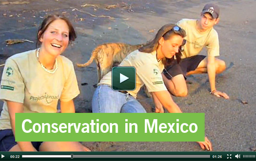 Mexico Conservation Video