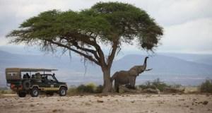 Safari destination