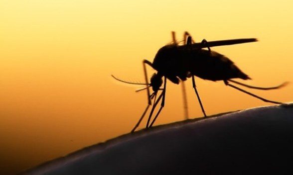vitamin for mosquitoes