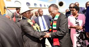 museveni in zimbabwe