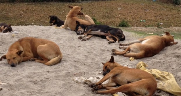 world animal dog culling