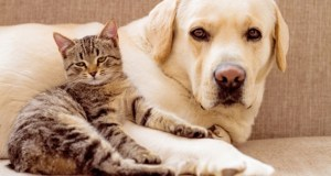 feline and canine coronaviruses infect animals