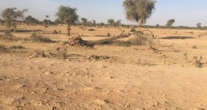 Climate Change And Insecurity Pursuing The Displaced In Bukina Faso