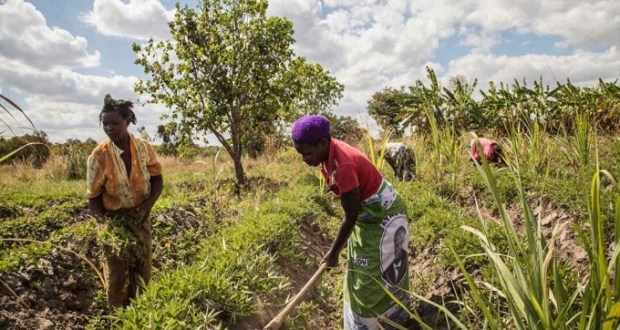 UN Report Says Green Recovery Can Revive Covid-Hit African Economy