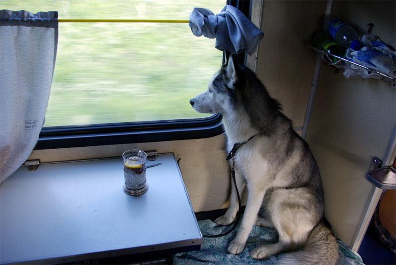 Перевозка животных в поезде - правила РЖД в 2019 году