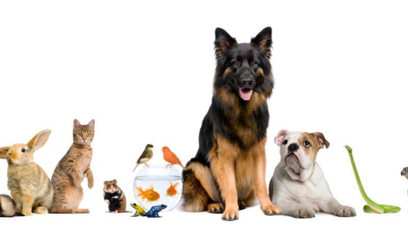 Customized Meditation for Animals