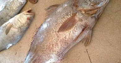 Fishermans in Karachi Caught 2 Fishes worth of 40 Lac