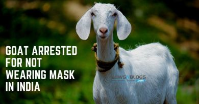 goat arrested for not wearing mask in India