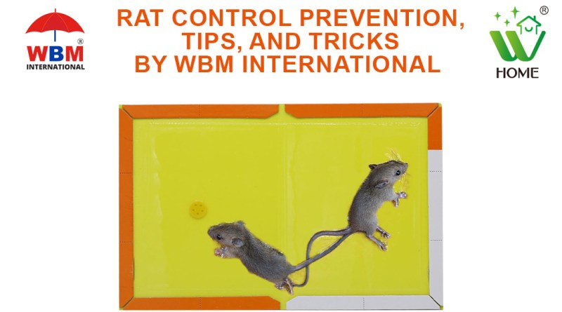 RAT CONTROL PREVENTION, TIPS, AND TRICKS BY WBM INTERNATIONAL