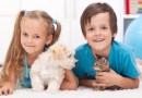 Gifts for Children Who Love Animals