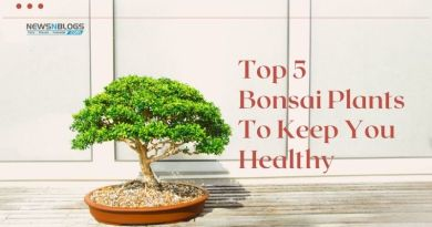 Top 5 Bonsai Plants To Keep You Healthy