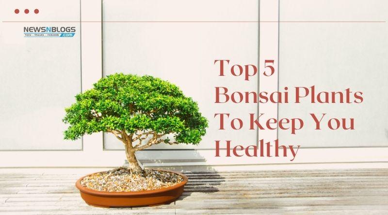 Top 5 Bonsai Plants To Keep You Healthy