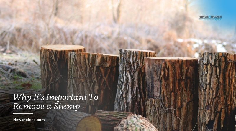 Why It's Important To Remove a Stump