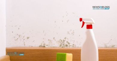 Tips to stop the mold growth at the earliest