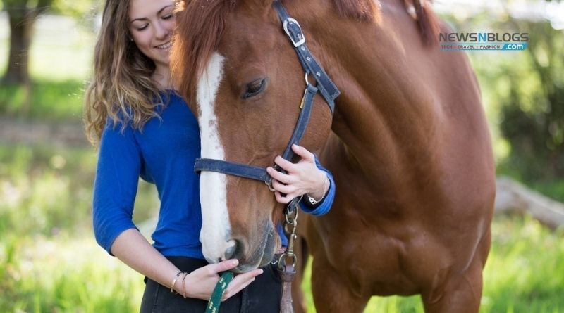 How to Take Care of a Horse