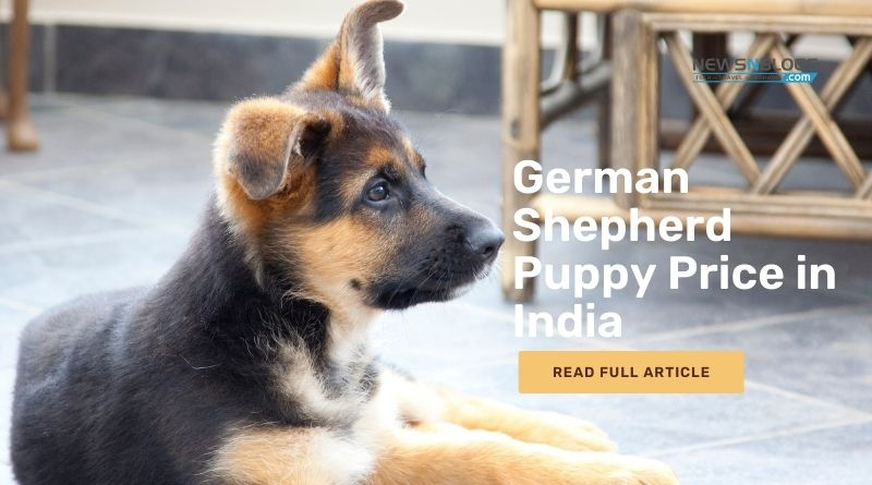 German Shepherd Puppy Price in India